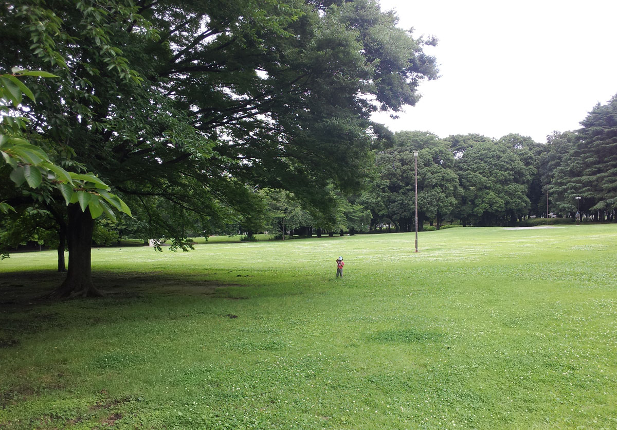 Small child off alone, hunting bugs in Kinuta Park - June 29, 2014