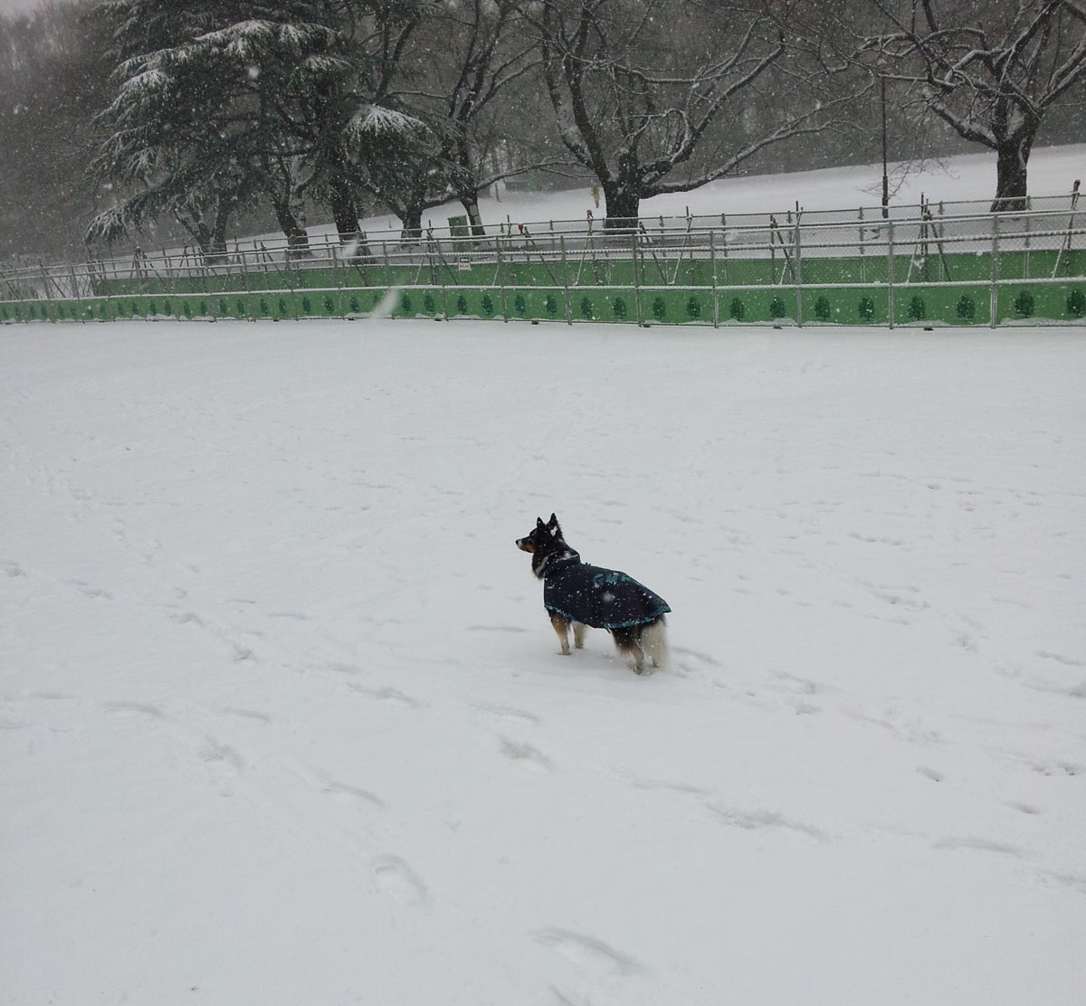 Dog in the snow - Feb. 8, 2014