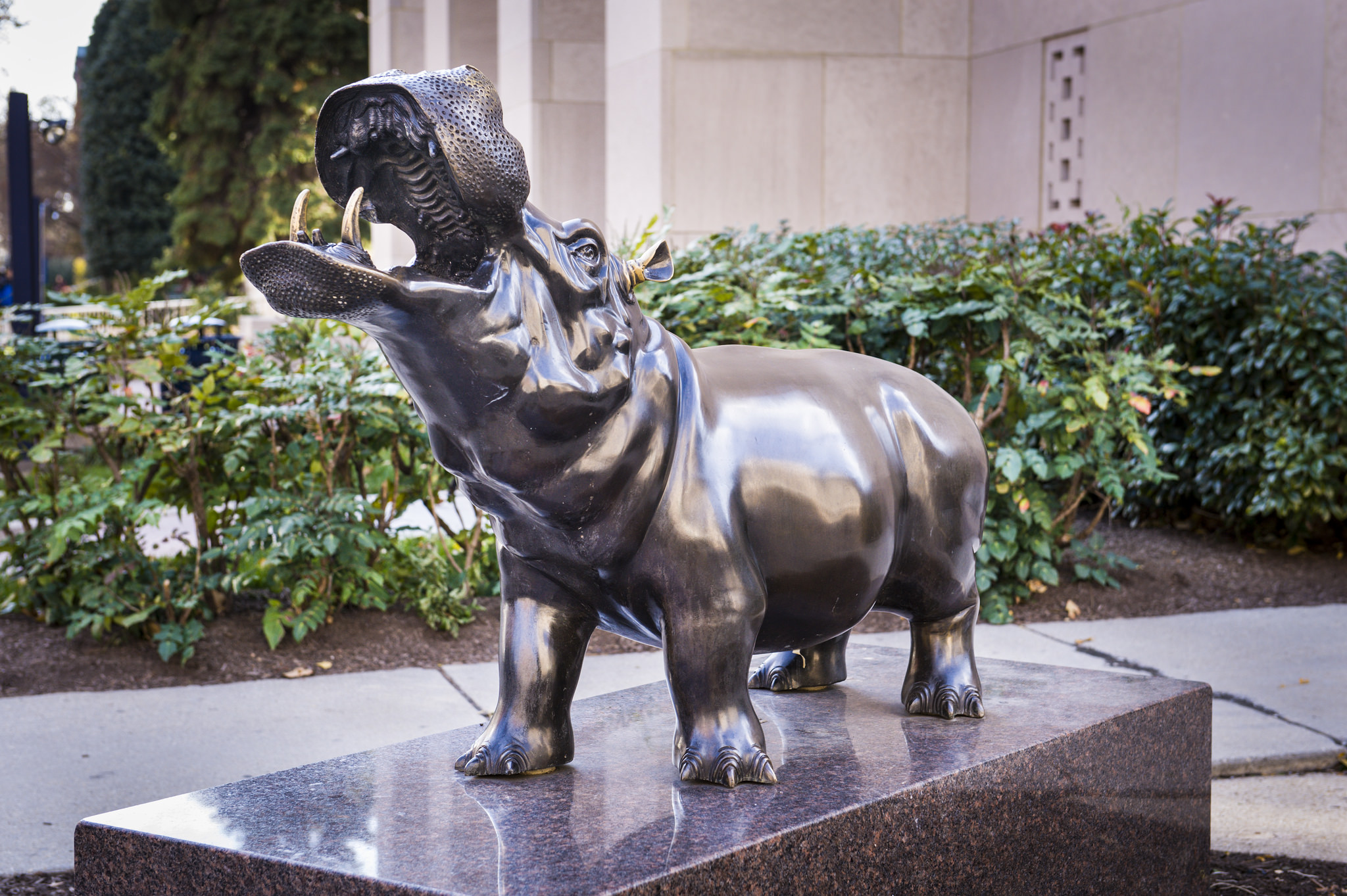 Hippo Statue at George Washington University
